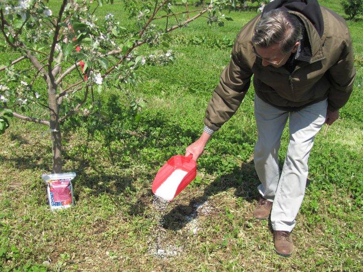 fertilizare cires