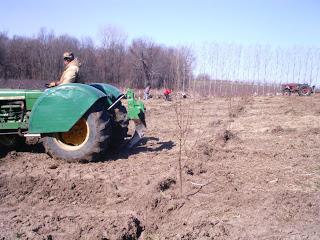 plantarea ciresului 1